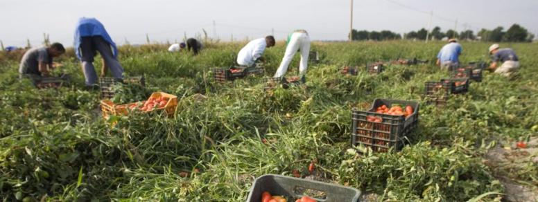Italie : onze travailleurs migrants meurent dans un accident de la route