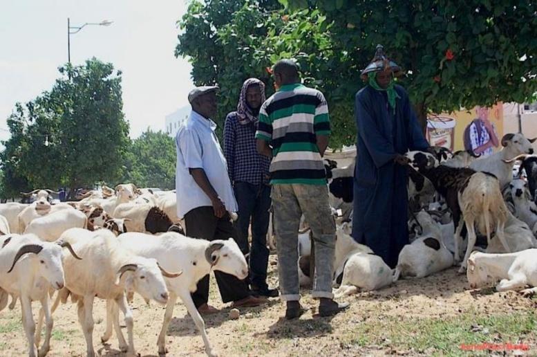 Moutons Tabaski 2018: Des prix hors de portée angoissent les Sénégalais