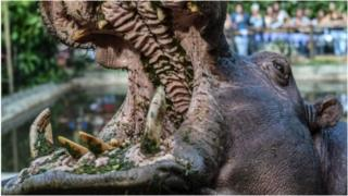 Un touriste mortellement agressé par un hippopotame