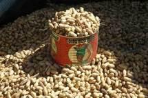 Le prix du kg d'arachide est à 165 francs