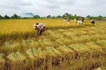 Agriculture : « Des excédents vivriers au Sahel et Afrique de l'Ouest, malgré les inondations… »
