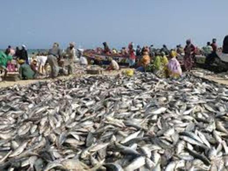 Pêche Sénégal-Mauritanie: Greenpeace Afrique exhorte les pays à trouver une solution pour de bon