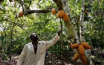 Côte d'Ivoire : Le blocage politique fait mal à l`économie