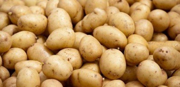 """Pomme de terre: """"plus de 160 mille tonnes produites et consommées"""" au Sénégal, selon Alioune Sarr"""