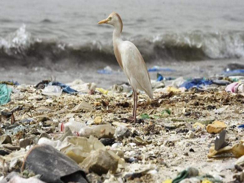 World CleanUp Day: vaste action citoyenne pour nettoyer la planète en un jour