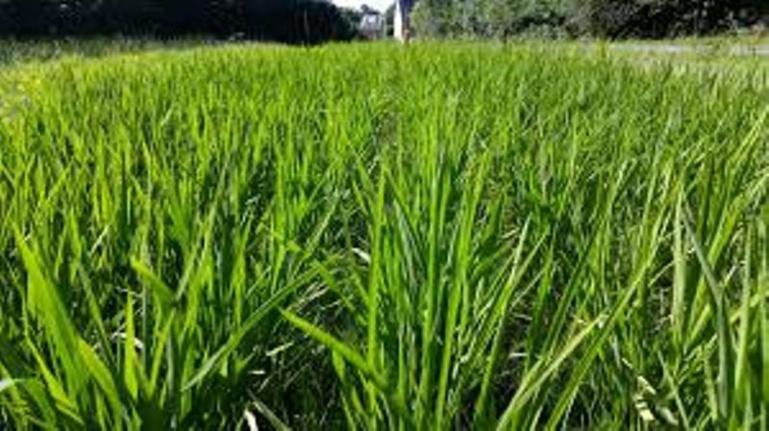 Riz: « l'Afrique absorbe environ 30% des importations mondiales », selon ministre de l'Agriculture