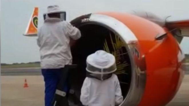 Des vols d'avion retardés par des abeilles
