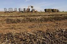 Accaparement des terres : Les multinationaux peuvent faire plier les gouvernements.