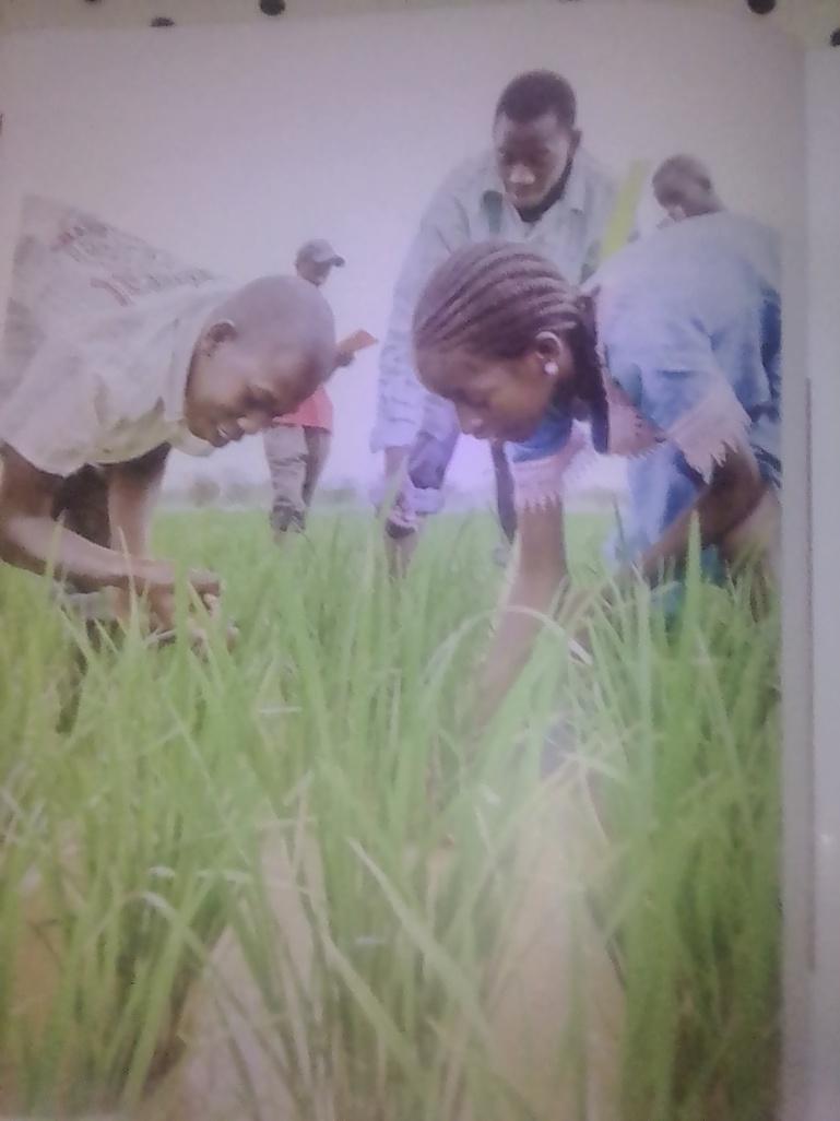 Conférence internationale sur l'agroécologie: les acteurs sonnent l'alerte pour faire face à la crise des systèmes alimentaires