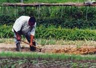Il y a un déficit d'analyse des impacts des politiques agricoles en Afrique de l'ouest et du centre (CORAF)