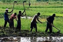 Seul 2,5% du budget national est consacré à l'agriculture selon Action Aid