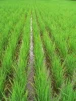 Financement de l'agriculture : 100 milliards du MCA iront dans la vallée