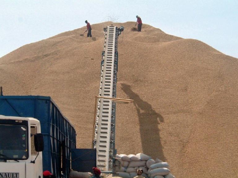 Filière arachide : les opérateurs prédisent une fin prématurée de la commercialisation si…
