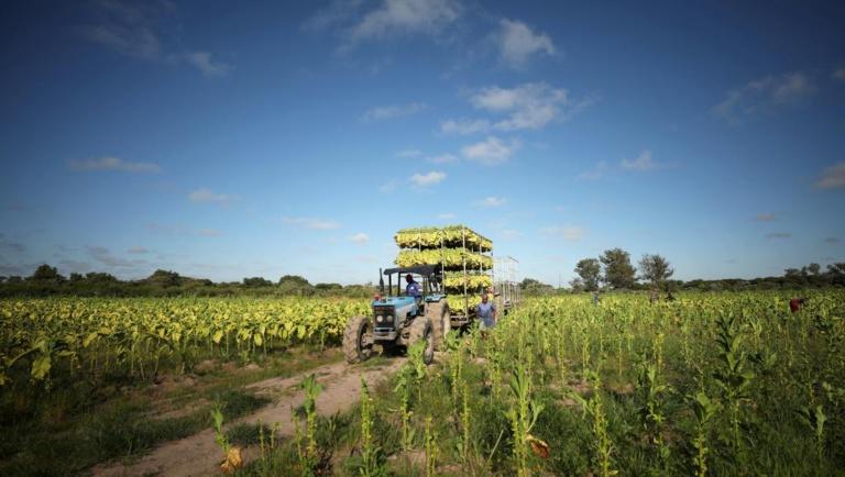 Zimbabwe: les fermiers blancs expulsés par Mugabe vont être indemnisés