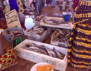 Le marché central au poisson de Pikine a un besoin urgent d'un milliard 200 millions