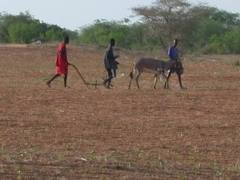 Le CRCR dénonce l'accaparement des terres et demande à l'Etat d'être vigilant