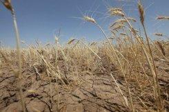 La FAO met en garde contre des prix alimentaire élevés et volatils