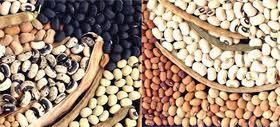Agriculture : Wade annonce une Société nationale de commercialisation des produits agricoles