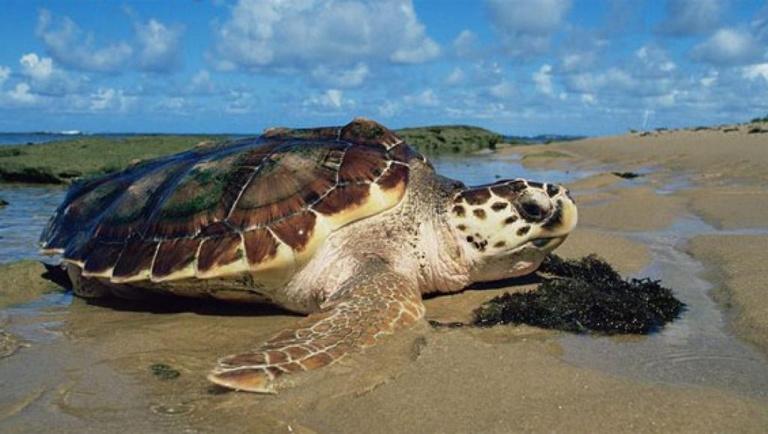 Madagascar: 4 morts suite à une intoxication à la viande de tortue de mer