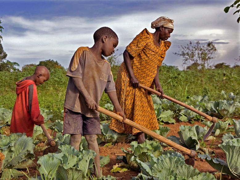 Il y a un échec économique et agricole en Afrique (Professeur Macoudou Ndiaye)