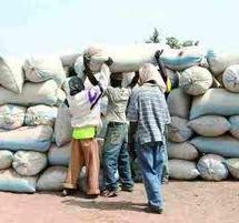 Campagne arachidière 2011-2012: Déjà 20 milliards pour le financement