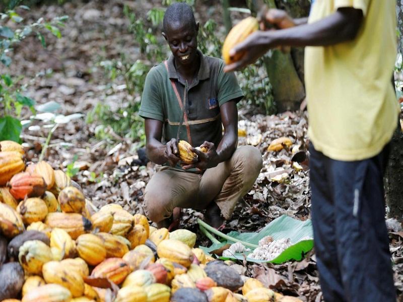 Cacao : le Ghana et la Côte d'Ivoire suspendent leurs ventes