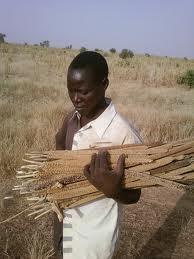 Productions agropastorales, le Sénégal dans une zone de  baisse : risque accru d'insécurité alimentaire