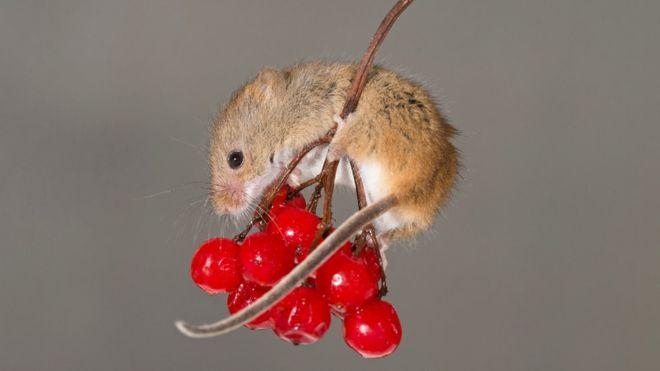 Le virus du SIDA éliminé chez des souris