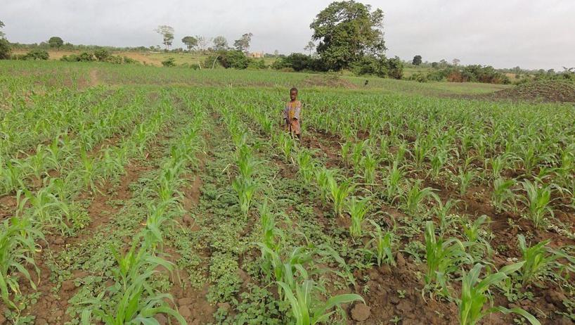 Le Togo mise sur la ZLECAf pour développer son agriculture et ses exportations