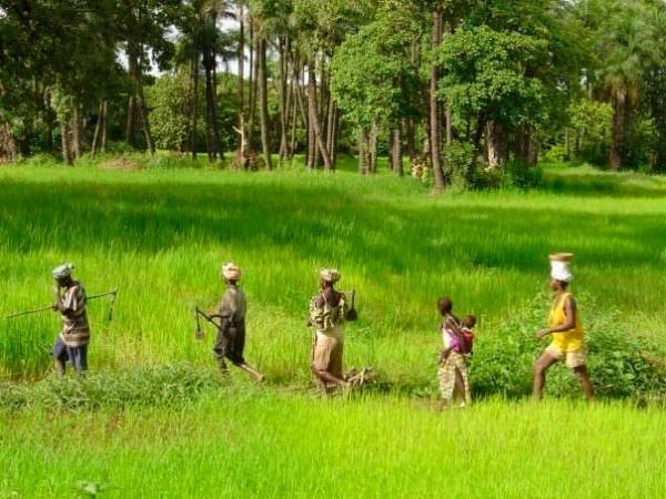 A Goudomp, une bataille rangée entre deux villages qui se disputent des terres fait 11 blessés