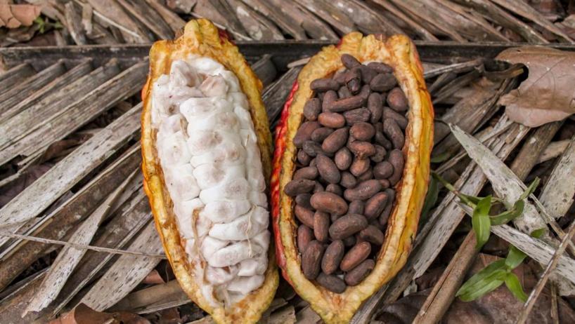 Cacao: Accra et Abidjan imposent un mécanisme de compensation