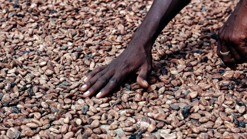 Entente Ghana-Côte d'Ivoire sur le cacao : «une rupture historique»