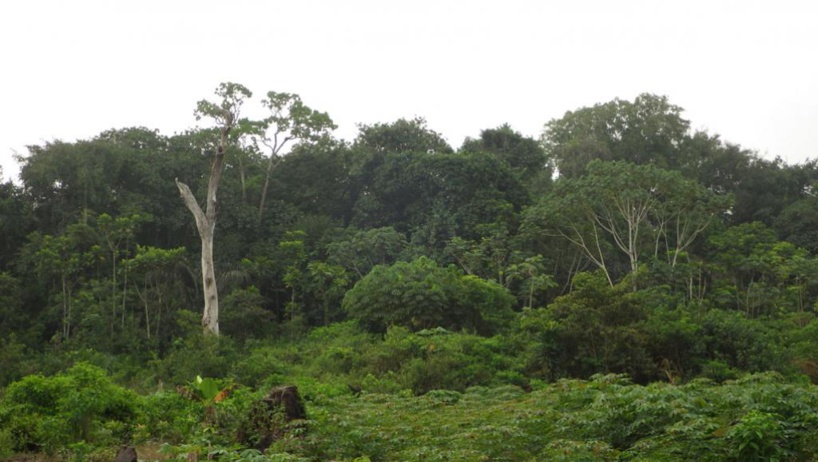 Côte d'Ivoire: un nouveau code pour reboiser et encadrer l'agroforestière