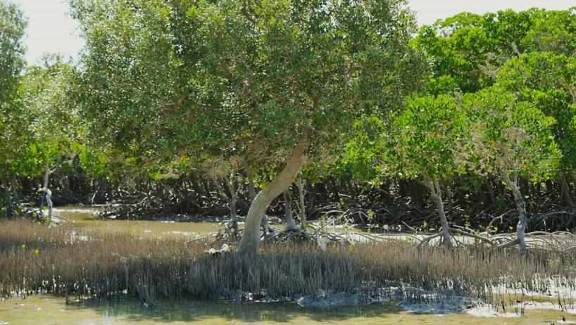Madagascar: WWF alerte sur la disparition des mangroves
