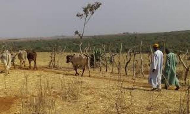 Installation tardive de l'hivernage: Les agriculteurs et éleveurs du Sénégal traversent une période grave