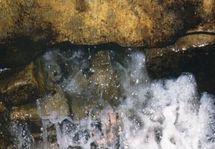 les vertus de l'eau de Zamzam
