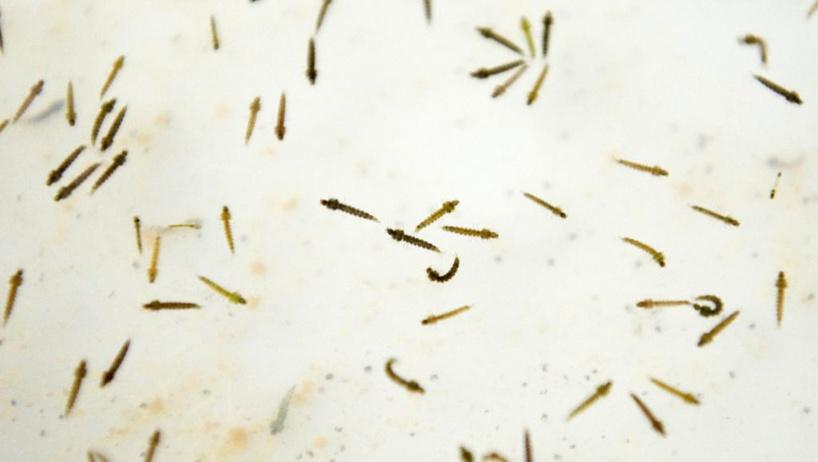 Lutte contre le paludisme: deux nouvelles moustiquaires testées au Burkina