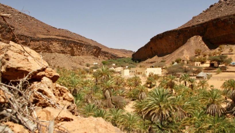 Changement climatique: les oasis sahariennes en danger