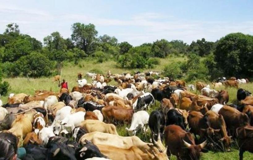 Recrudescence du vol de bétail à Goudomp: l'armée entre en action