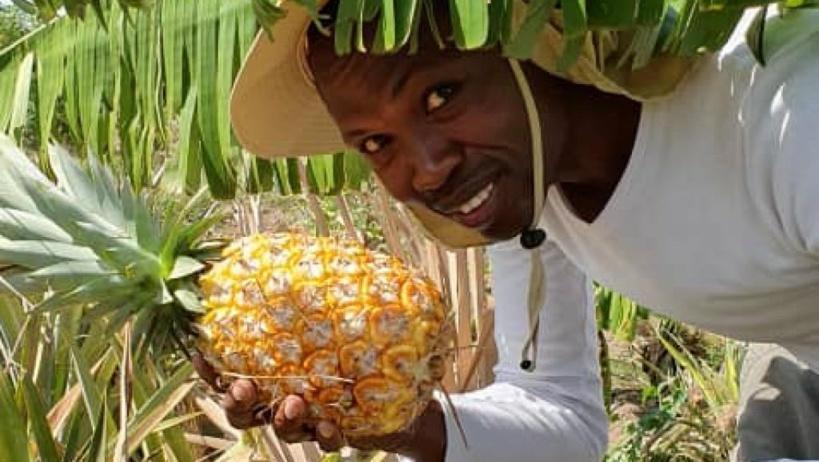 La ferme Nova au Tchad