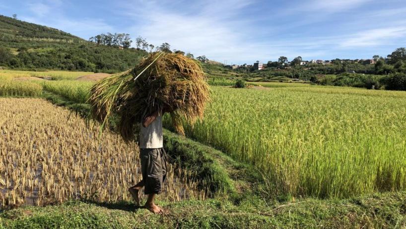 Madagascar: l'agriculture, une filière qui peine à se structurer