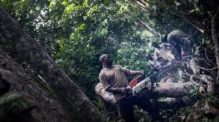 Le Gabon reçoit un appui pour protéger ses forêts