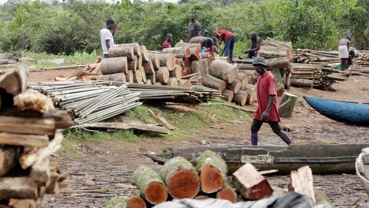 Coupe de bois à Kolda: le Forum Civil et deux autres organisations appellent l'Etat du Sénégal à plus de rigueur
