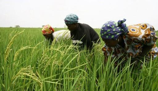 La croissance en Afrique Subsaharienne continue de fléchir (Rapport Banque mondiale)