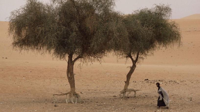 Sahel : insécurité alimentaire