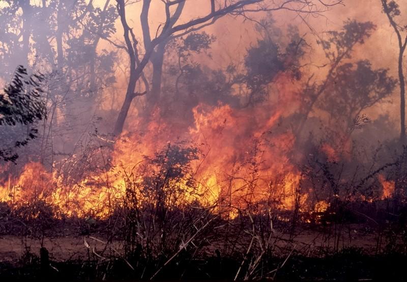 Un feu est en train de ravager le village de Diamagadio (Kaffrine)