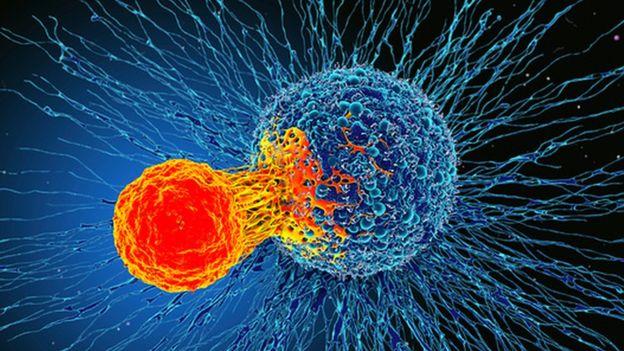 """Une nouvelle découverte dans le système immunitaire """"pourrait traiter tous les cancers"""""""