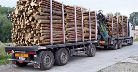 Trafic illicite de bois: deux camions gambiens interceptés à Sindian