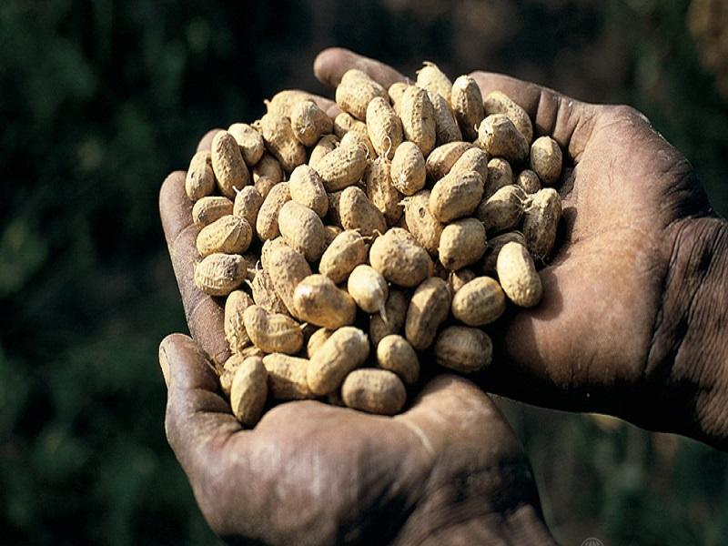 Mauvaises conditions de travail : les techniciens de l'agriculture menacent de bloquer les certifications des semences