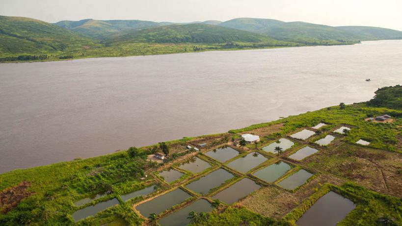 Le «mundele bureau», poisson mystère du fleuve Congo